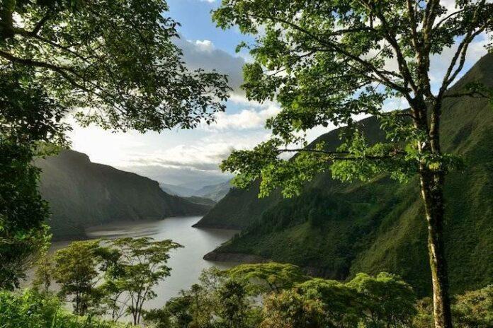 22 de junio: Día Internacional de los Bosques Tropicales