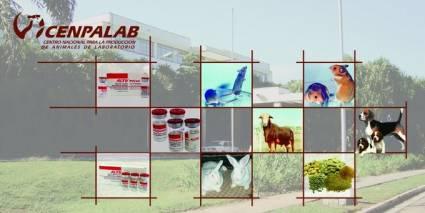El Centro Nacional para la Producción de Animales de Laboratorio apoya a otras instituciones científicas en la obtención de una vacuna contra la COVID-19. Autor: Cortesía de la entrevistada