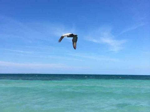 Cuba: concurso de fotos de naturaleza asociado a simposio de playas