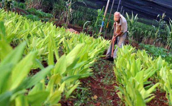 Contará Cuba con nueva ley en materia de soberanía alimentaria