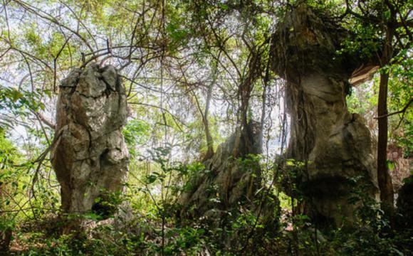Bosque de Piedra. / Fotos: Jaliosky Ajete Rabeiro
