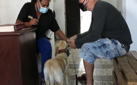 Celebran hoy Día del Trabajador de la Medicina Veterinaria Cubana