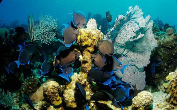 Nuevo equilibrio con la humanidad en Día Mundial de Océanos