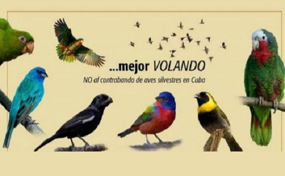Detectan en frontera comercio ilícito de especies cubanas de valor ambiental